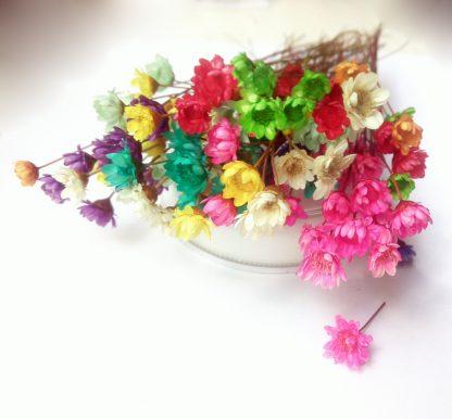 Сухоцветы, цветы Гликсии